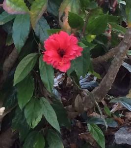 沖縄の穴場カフェをご紹介します