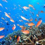 石垣島10月海水浴